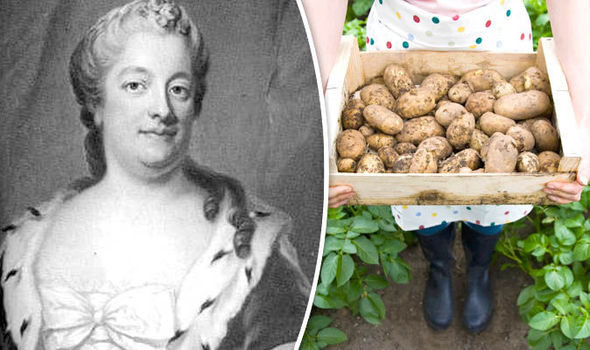 Google Doodle honour Eva Ekeblad, the woman who made vodka from potatoes photo