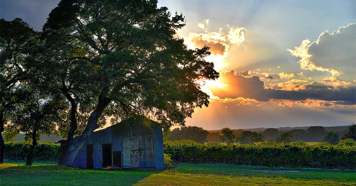 Texas Wine, Explained photo