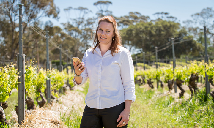 Vineyard Biosecurity Project Looks To Next Stage After Trial photo