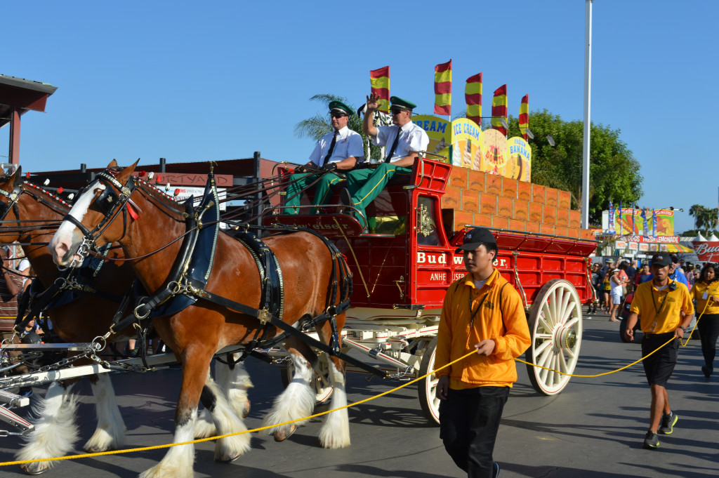 The Budweiser Clydesdales Are Back Wowing The Crowd At The Oc Fair photo