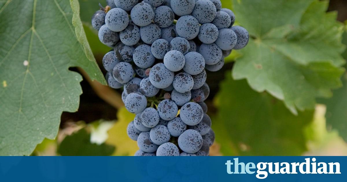Wine: Hooked On Classics photo