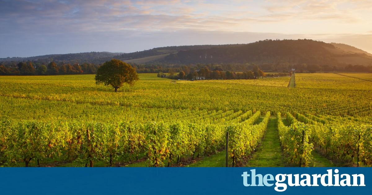 Three Cheers: A Trio Of English Wines photo
