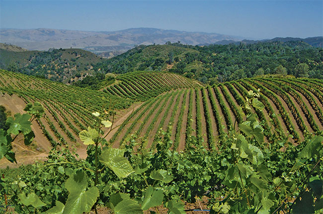 Calera Sold To Duckhorn: New Owner For California Pinot Maker photo