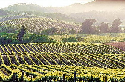 California Lawmakers Address Housing Shortage For Wine Workers photo