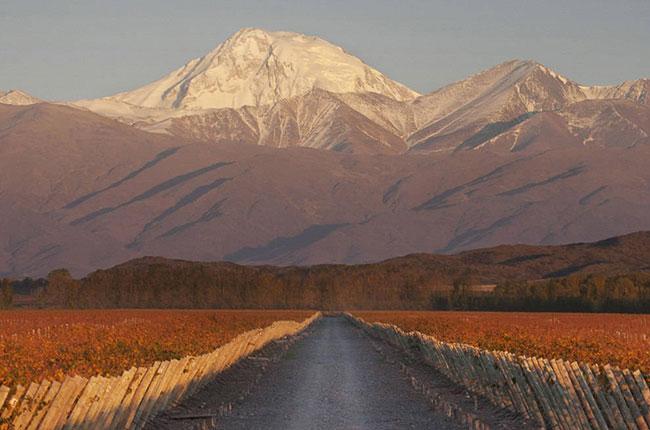 Producer Profile: Terrazas De Los Andes photo