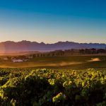 Old Sauvignon Blanc Favourite Diemersdal Pockets Young Wine Show Trophy photo