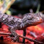 Man sues Heineken after drinking beer full of dead geckos photo