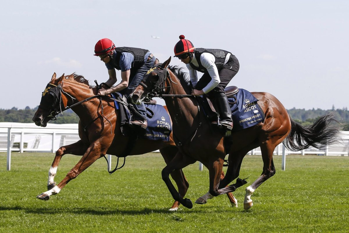 Molecomb Stakes Favourite Happy Like A Fool In Great Form Ahead Of Glorious Goodwood photo