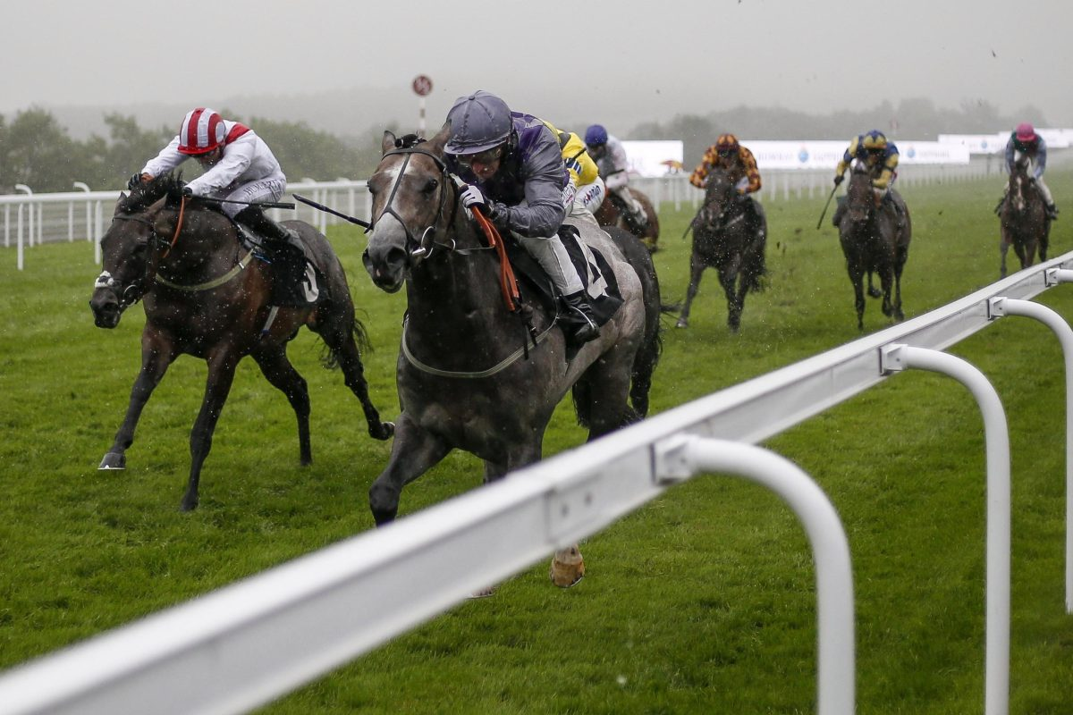 Havana Grey Battled To Win The Molecomb Stakes At Glorious Goodwood In Miserable Conditions photo