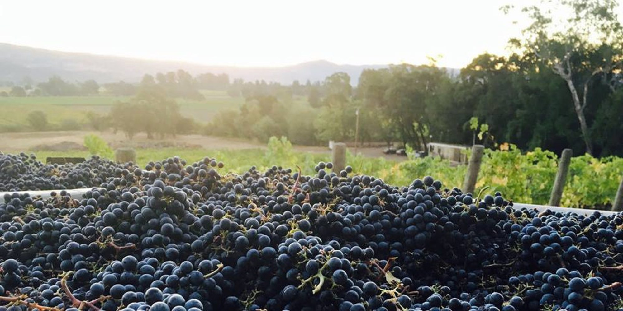 Where To Drink, Stomp Grapes & Work The Vineyards During Harvest Season In Wine Country photo