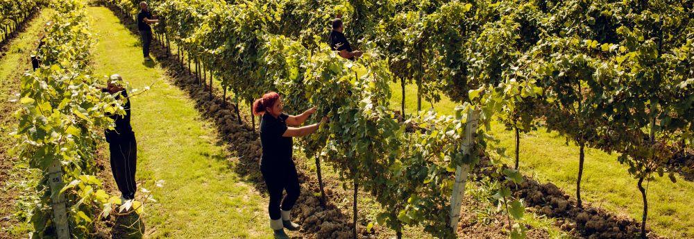British Sparkling Wine: Raising A Glass To Home-grown Fizz photo