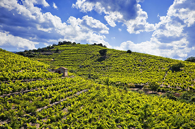 Rare Roussillon Grapes That All Wine Lovers Should Know photo