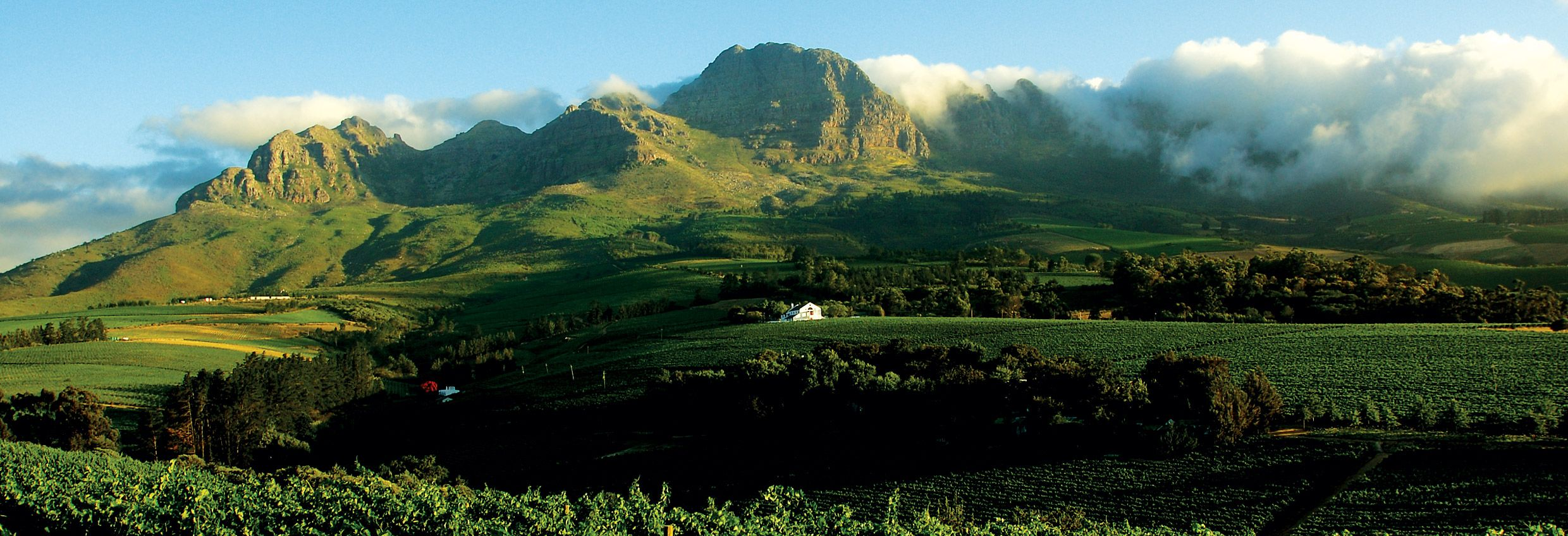 South Africa's Wine Legends: Hempies du Toit photo