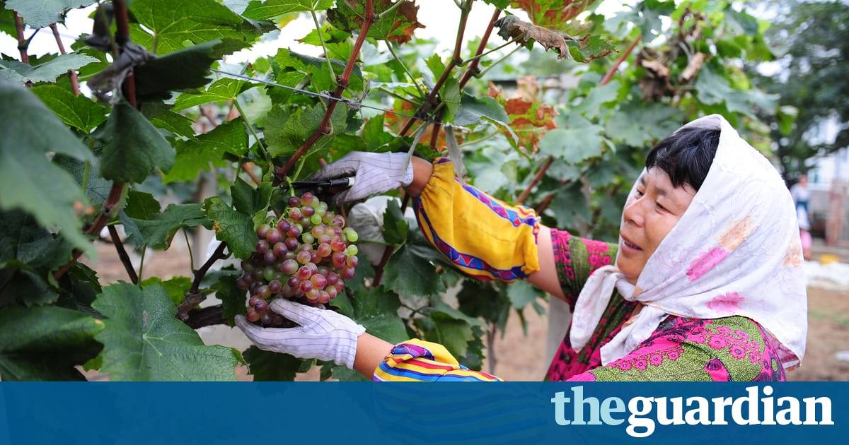 Chateau Changyu: A Growing Taste For Chinese Wine photo