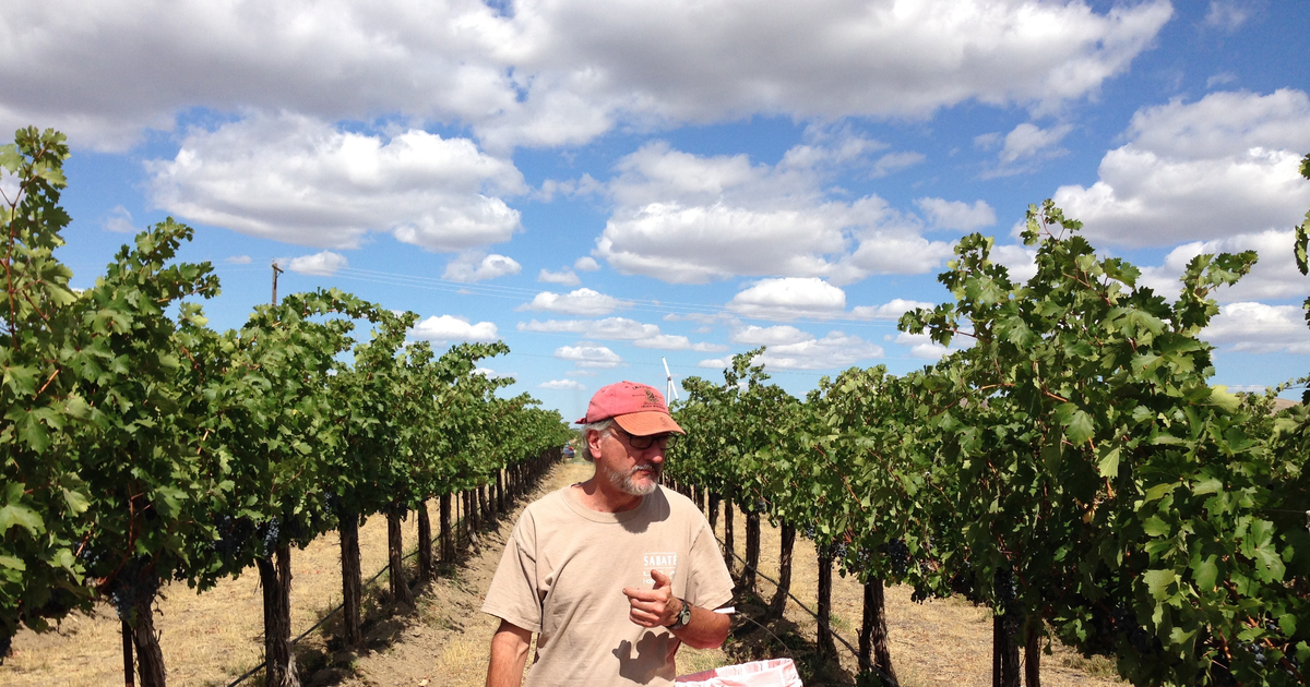 Klipsun Vineyards Is Still Growing Some Of The State's Best Wine Grapes photo