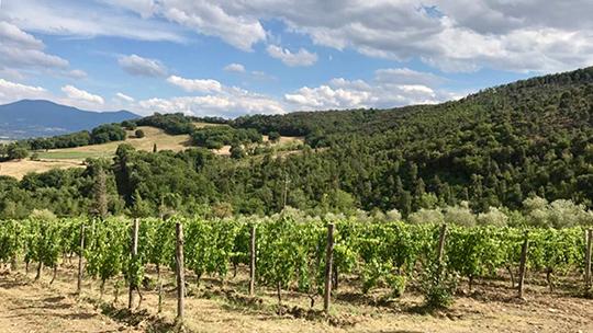 Exclusive: Falesco's Cotarella Family Buys Le Macioche Brunello Estate photo