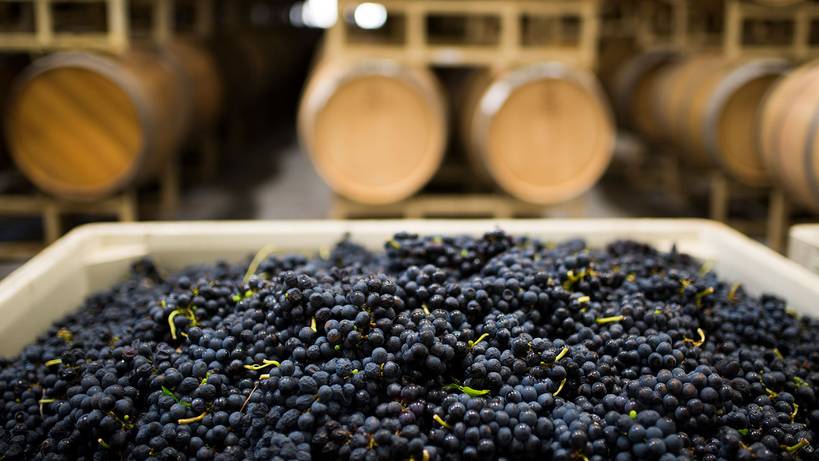 Texas Wineries Unscathed By Hurricane Harvey photo