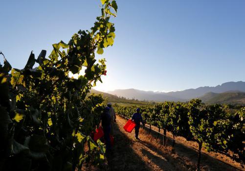 Michael Fridjhon: Sa Wine's Ongoing Lack Of Transformation photo