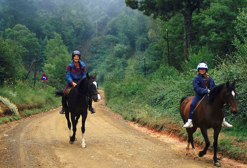 Horseback Safaris In South Africa photo