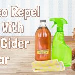 Apple Cider Vinegar Is as Good for Your Dog as It Is for You photo