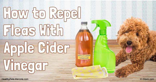 apple cider vinegar is as good for your dog as it is for you. Black Bedroom Furniture Sets. Home Design Ideas