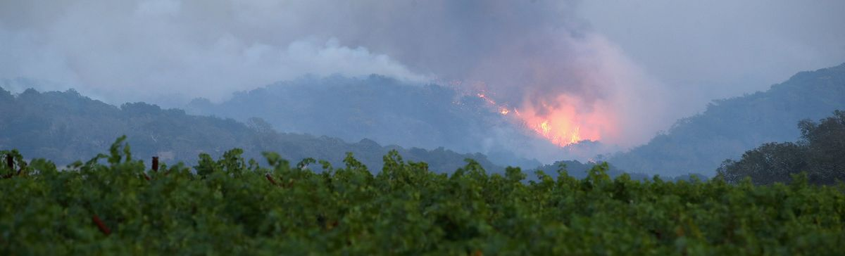 California's Wine Industry Begins Picking Up Pieces After Fire Damage photo