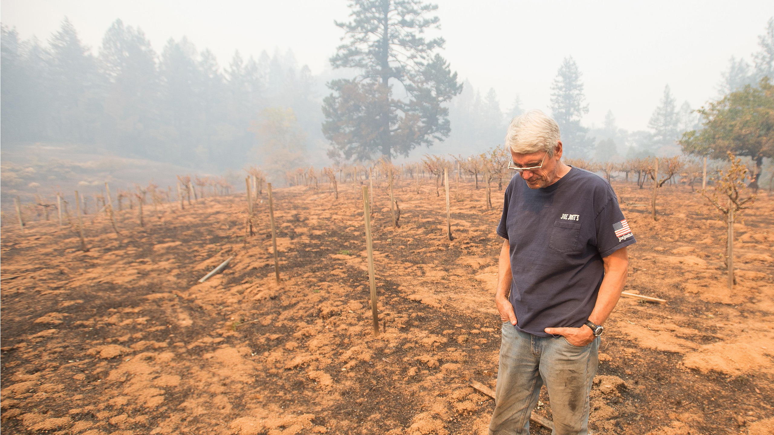 How Fire Has Shaped California?s Wine Industry photo