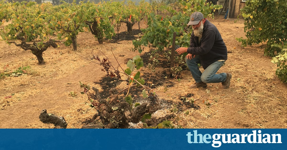 California Wildfires Jeopardize Fate Of Family-run Vineyards photo