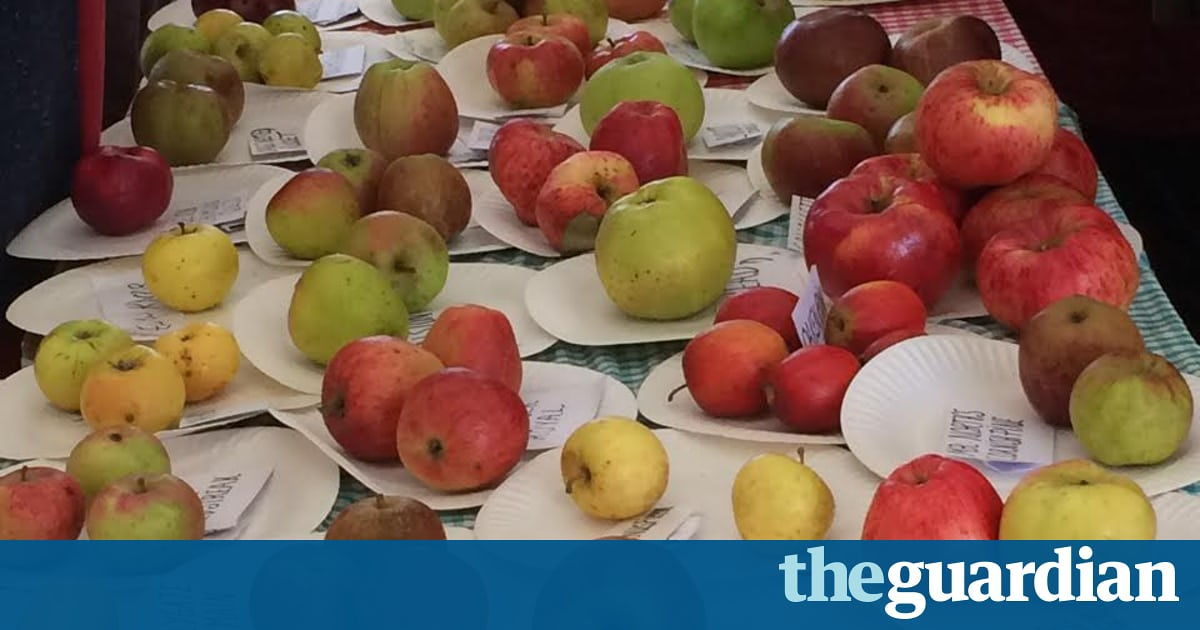 Country Diary: The Air Is Heavy With The Scent Of Apples photo