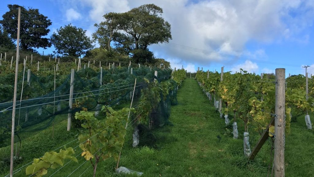 Cut Tax Plea To Help Welsh Winemakers photo
