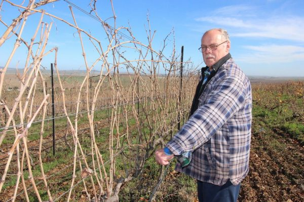 Fine and Cold Winter on Org de Rac Bodes well for Organic Vineyard Health photo