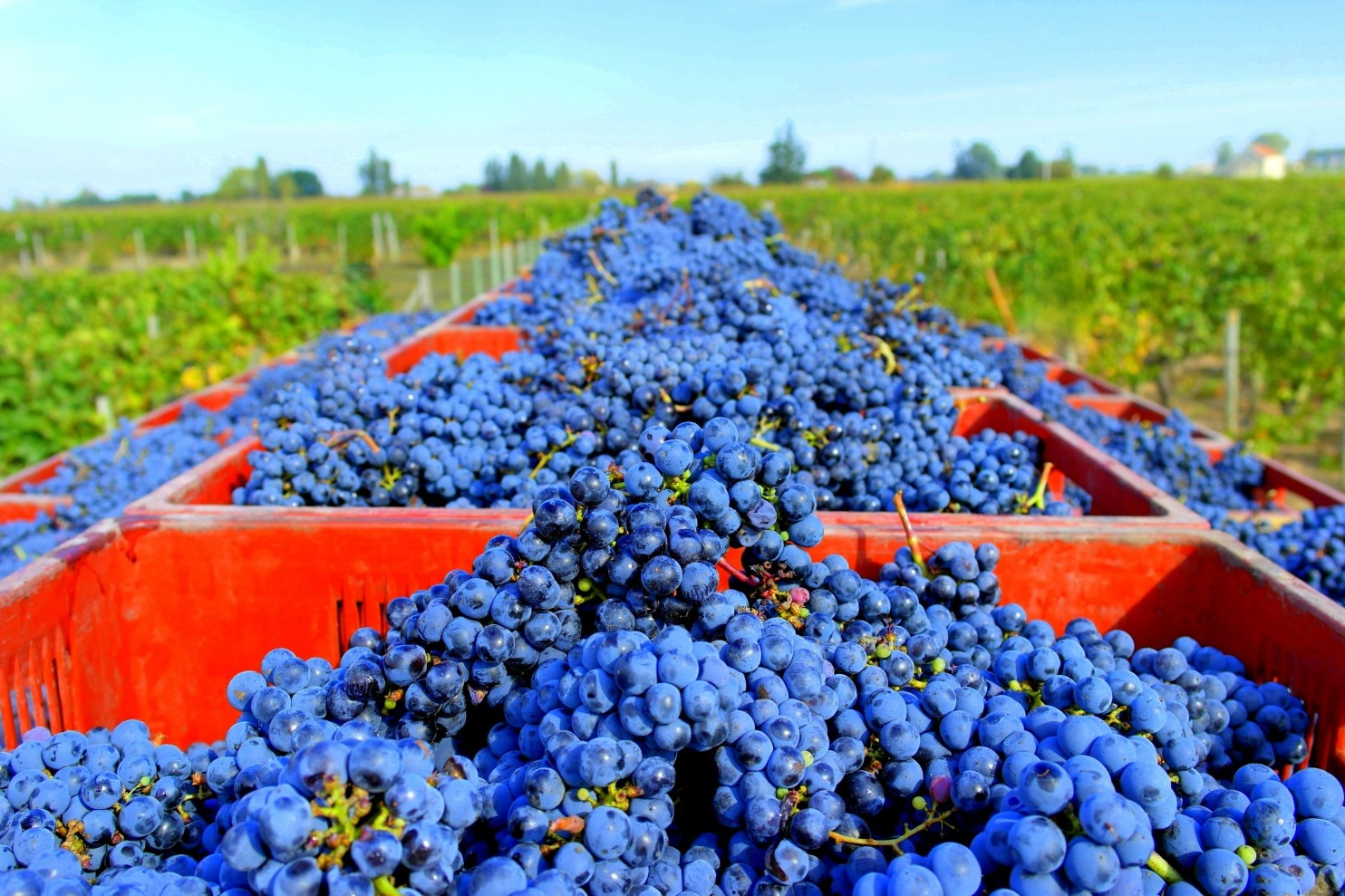 Is The Wine In Your Glass Friendly To The Environment? There Soon Will Be New Ways To Know. photo