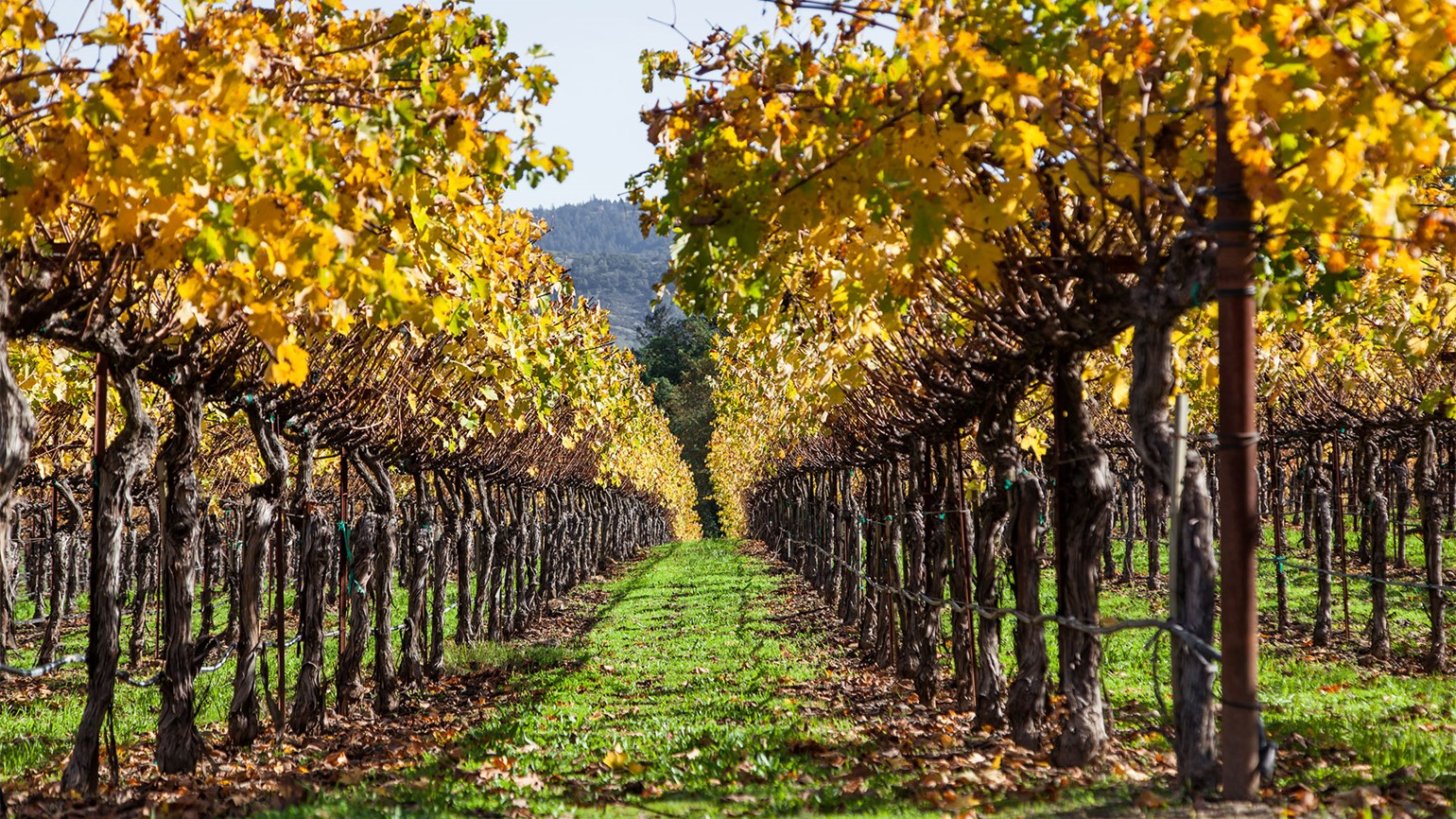 Much Of Wine Country Open, But Agent Finds It A Tough Sell: Travel Weekly photo
