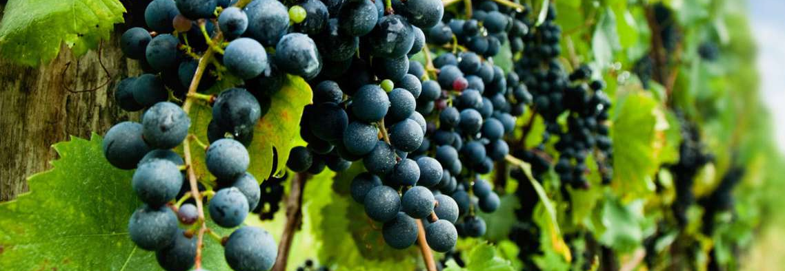 Robertson Wine Valley wines excel at the 2017 Vitis Vinifera Awards photo