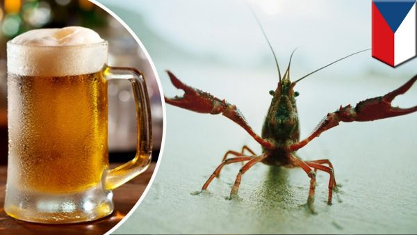 Brewery uses crayfish to purify water photo