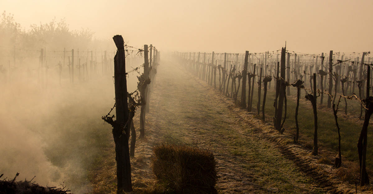 What Do The Wine Country Fires Mean For Napa And Sonoma Wine? photo