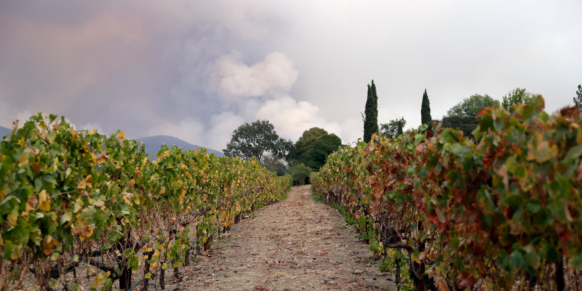 Here's How The Devastating Wildfires Will Affect Northern California's Wine Industry photo