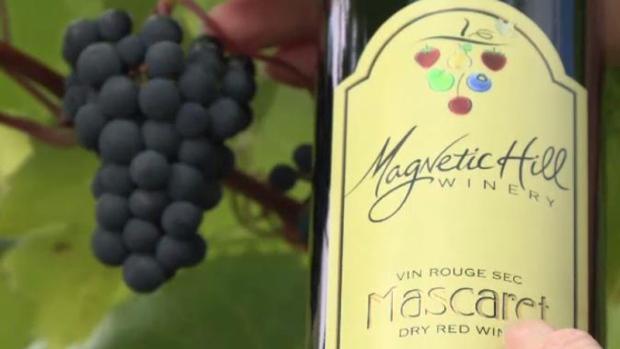 N.b. Wine Industry Hoping To Celebrate Vintage Year photo