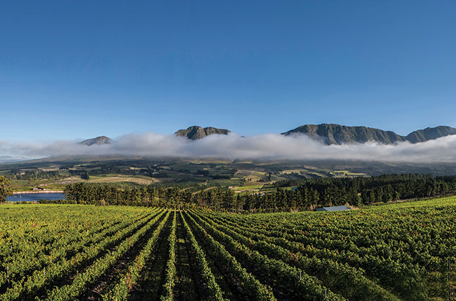 South Africa: Hemel-en-aarde Wineries To Visit photo
