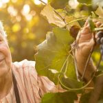 This 97-year-old Woman Is Still Working The Grape Harvest photo