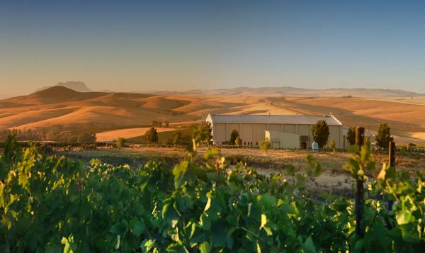 Swartland's Org de Rac Makes Waves with Glowing Critical Acclaim photo