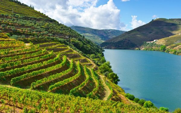 The Boplaas team takes an inspiring trip to Porto and the Douro Valley photo