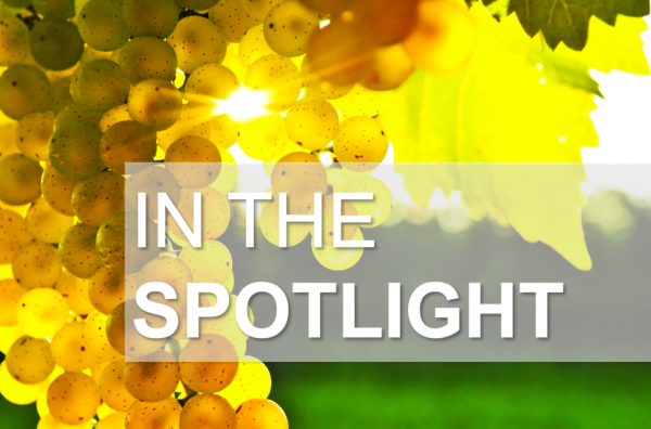 Wines in the spotlight photo
