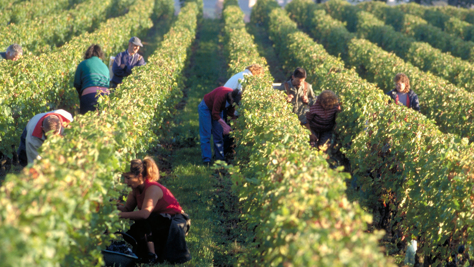 Bordeaux's St.-emilion Wine Region Will Require Sustainable Vineyard Farming photo