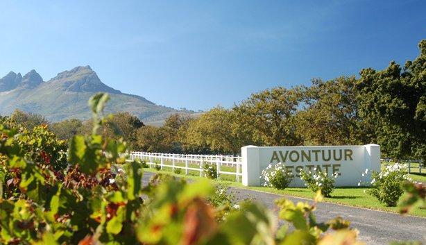Avontuur Wine Estate And Thoroughbred Farm In Stellenbosch photo