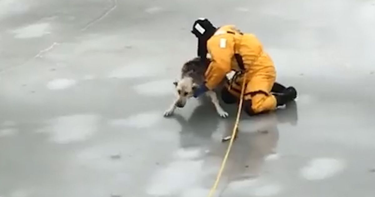 Thin Ice Didn't Stop Firefighters From Saving This Stranded Dog photo