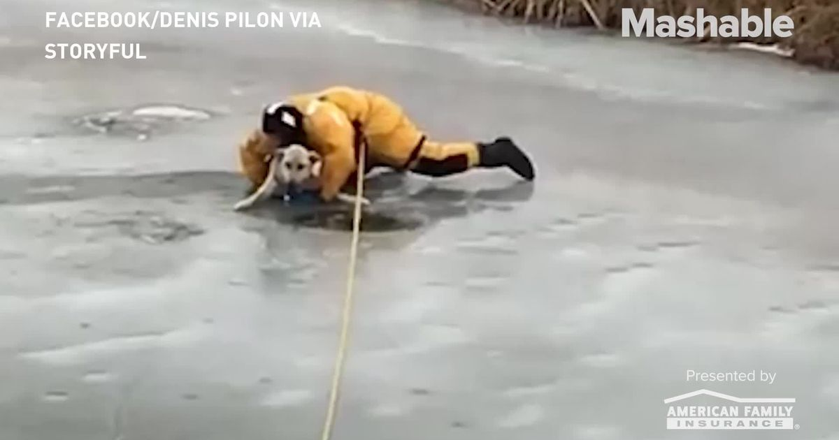 Thin Ice Didn't Stop Firefighters From Saving This Stranded Dog (paid Content) photo