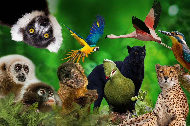 Go Wild At Plett Animal Sanctuaries photo