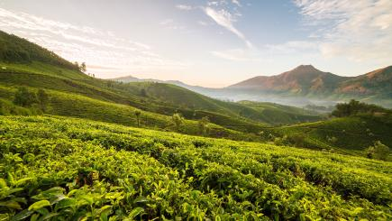 5 Terrific Tea Tours Around The World To Celebrate International Tea Day photo