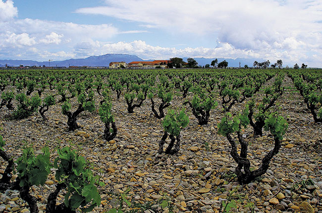 Ructions In Rioja photo
